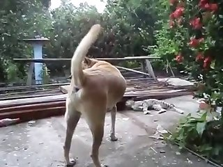 12.dog Fucking Cat